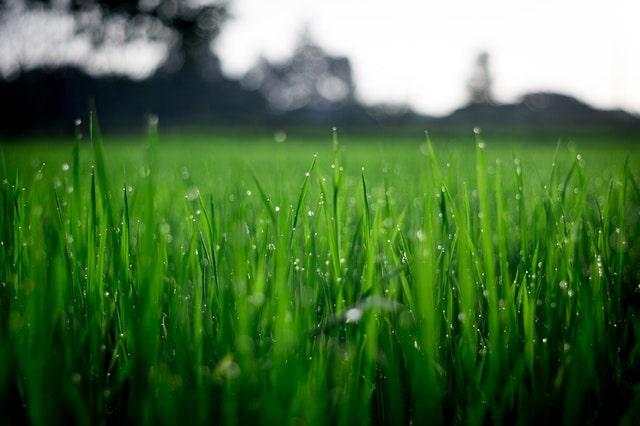zelf graszoden leggen